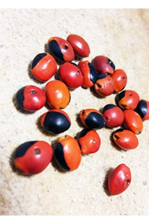 Семена Huayruro